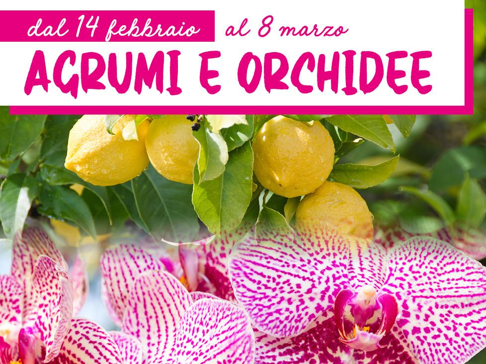 Mostra Agrumi Orchidee